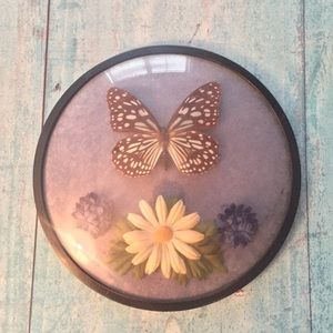 Vintage Dome Frame Display of Real Butterfly